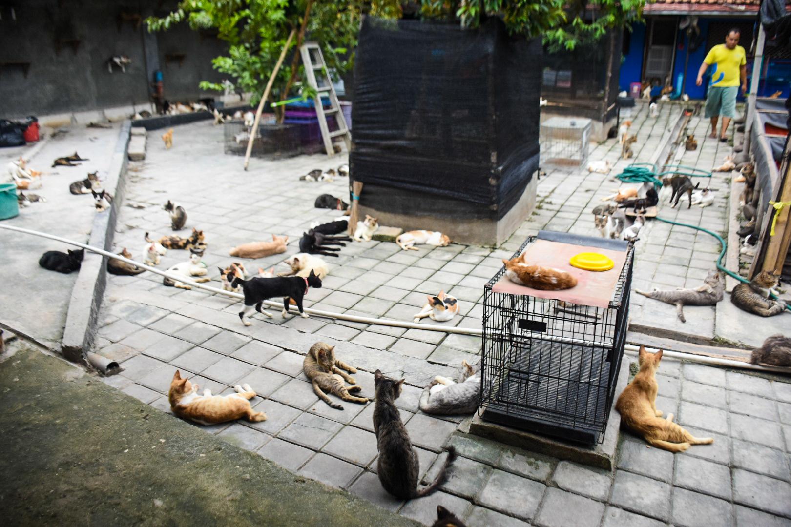 penampungan kucing lokal
